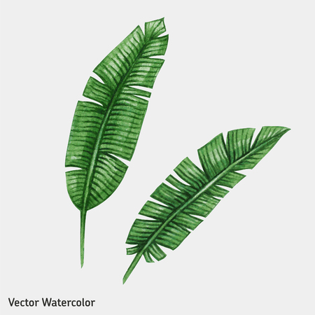 tree leaf: Watercolor tropical palm leaves. Vector illustration.