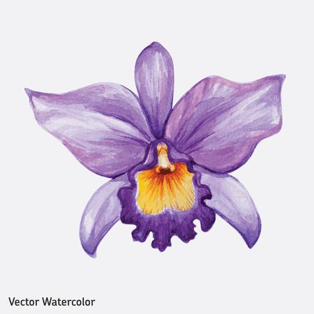 orchidee: Acquerello fiore di orchidea tropicale. Illustrazione vettoriale. Vettoriali