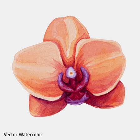 Watercolor tropical orchid flower. Vector illustration. Vettoriali