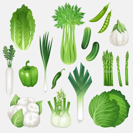 Set of fresh green vegetables. Healthy food vector illustration.
