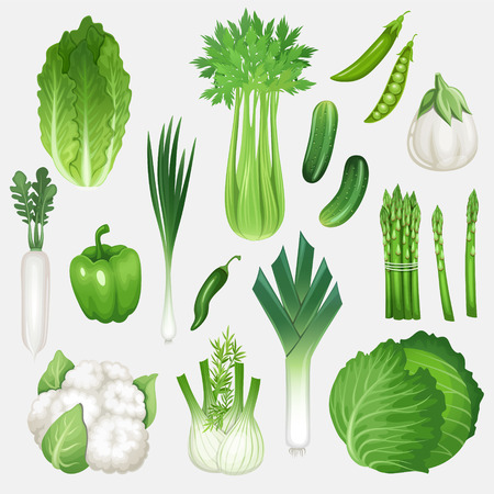 Set van verse groene groenten. Gezonde voeding vector illustratie.