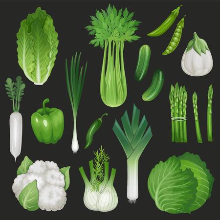 leek: Set of fresh green vegetables. Healthy food illustration. Illustration