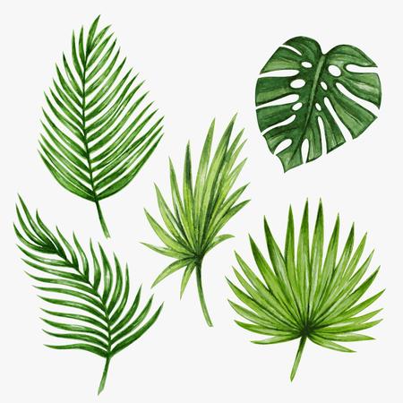 hojas de palmera tropical de la acuarela. Ilustración del vector.