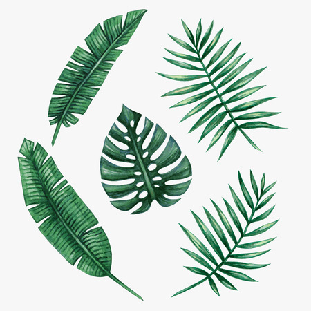 Watercolor tropical palm leaves. Vector illustration. Imagens - 62670191