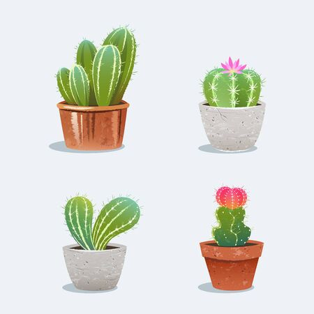 Cactus in flower pot. Home plants. Vector Illustration