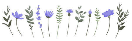 Flower and branch collection. Set of purple flowers, anemones, daisies, lavender and cornflowers isolated on wihite background. Vector illustration. Ilustracja