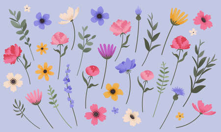 Flower and branch collection. Set of summer flowers, peonies, anemones, daisies and cornflowers. Colorful vintage style florals. Vector illustration.