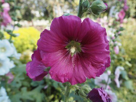 annealed: Close up beautiful purple flower Stock Photo