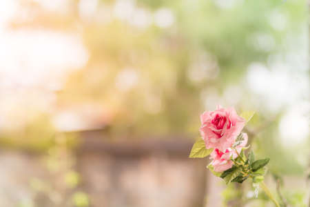 faked: faked plastic flower,rose,in nature background.