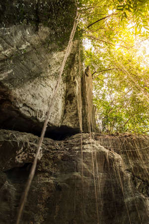 beautiful nature limestone cliff for rock climbing.adventure trekking in tropical rain forest.