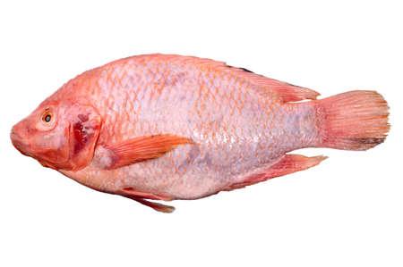 mango fish: Nile Tilapia, Mango fish, Nilotica , red fish Stock Photo