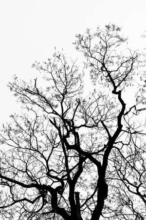 Detailed tree branches  black and white   版權商用圖片