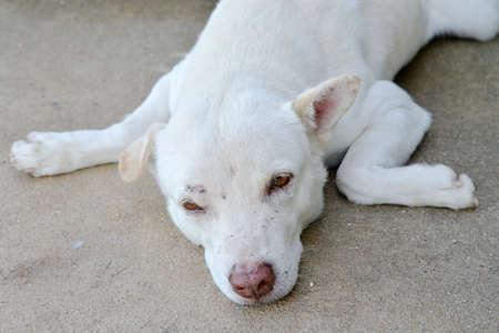 sad dog: A sad dog looks away