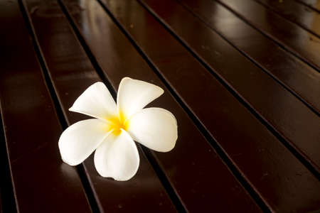 whiteness: Tropical flowers frangipani on wood