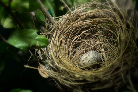 Nest of bird on the tree with eggs in the forest