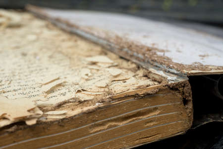Book damaged by termites