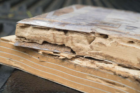 run down: Book damaged by termites