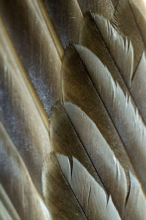 Closeup textured and surface of feather