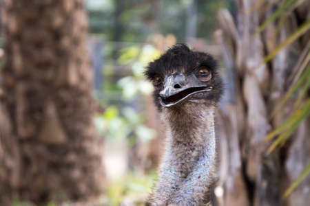Emu in Thailand Zoo