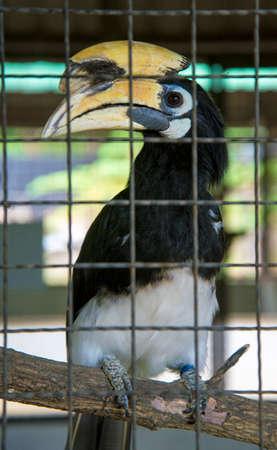 Hornbill in the zoo. Thailand