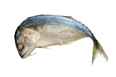 Streamed mackerel , Mackerel fish isolated on a white background..