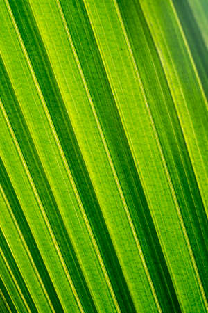 Coconut leaf, light and shadow, abstract background