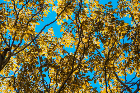 blue sky and yellow leaf background