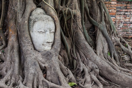 Face of buddha in the tree photo