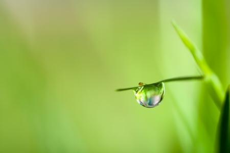 dews on grass Stock Photo