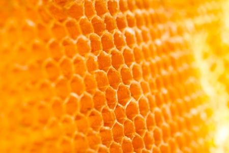 propolis: beehive  Stock Photo