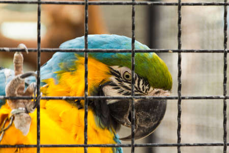 Green, blue and yellow macaw in captivity Stock Photo - 9533008