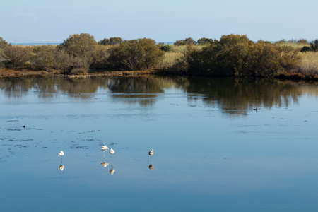 4 flamingos (Phoenicopterus Ruber) and other birds resting in water on a sunny day. Guadalhorce river Natural Reserve in Malaga, Spain. Stock Photo - 11860842