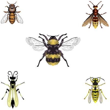 hive: Cinco de abejas y avispas illustations Vectores