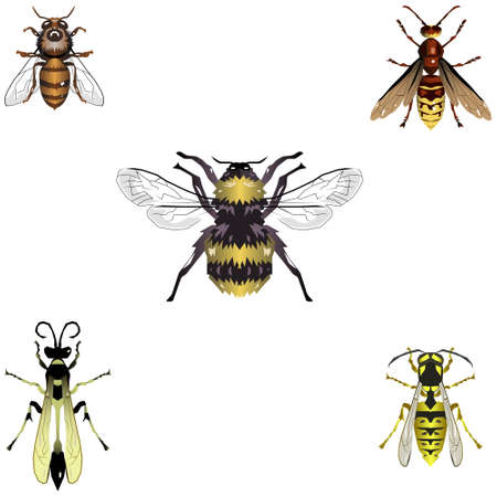 Five bee and wasp illustations