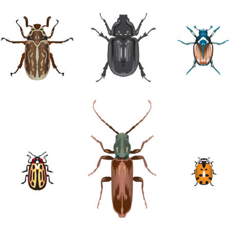 Six beetle illustrations Stock Vector - 4719441