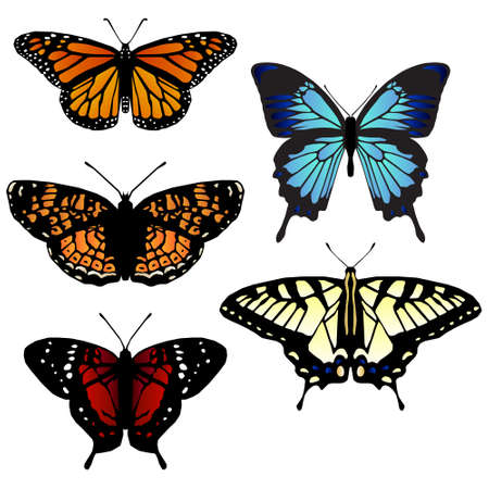butterfly wings: Five butterfly illustrations Illustration