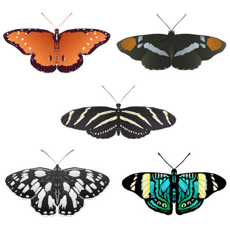 Five more butterfly illustrations Vector