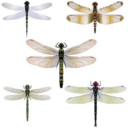 Cinque illustrazioni libellula Archivio Fotografico - 4719448