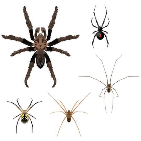 5 つのクモのイラスト  イラスト・ベクター素材