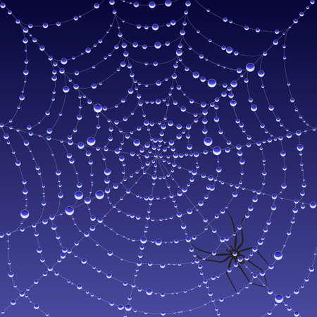 condensation: Spiderweb with dew Illustration