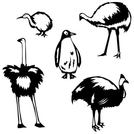 Stylized Flightless Birds Çizim