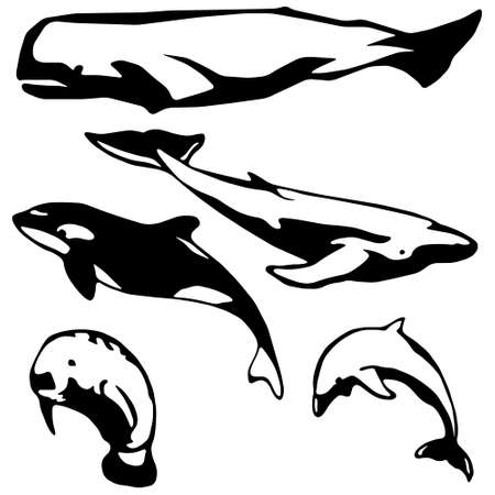 Stylized Marine mammals Stock Vector - 4728522