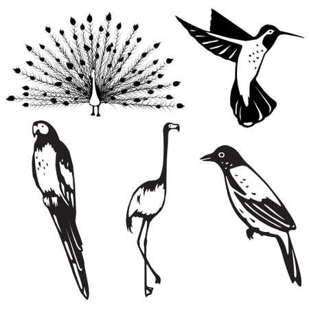 Stylized, ornate birds Vector