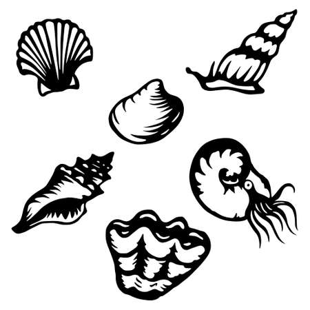 scallop shell: Stylized shells and shellfish Illustration