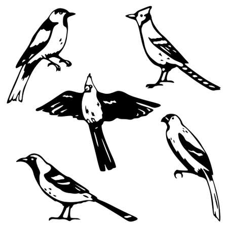 Stylized songbird illustrations