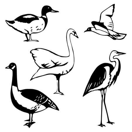 Stilizzata uccelli acquatici Archivio Fotografico - 4731413