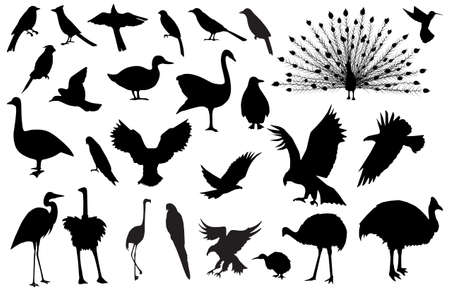 Silhouettes of birds Illustration