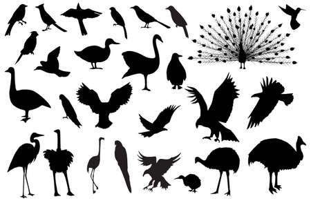 Silhouettes of birds Stock Vector - 4734259
