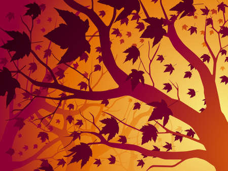 Autumn maple background Vector