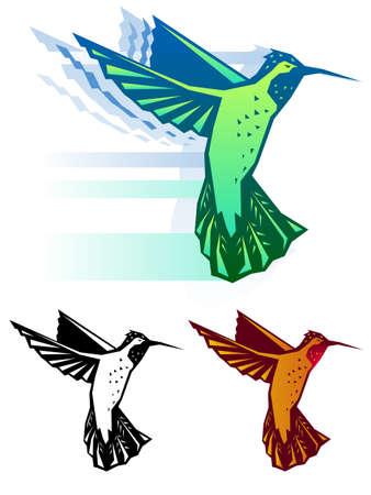 Graphic Hummingbird illustration Vector